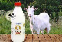 """Το γάλα του Μοριά """"έρχεται"""" στην Αθήνα"""