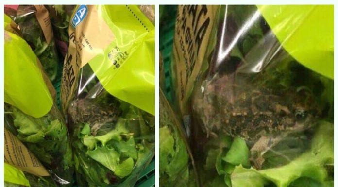 Βάτραχος «μαχητής» βρέθηκε σε σαλάτα του ΑΒ Βασιλόπουλου