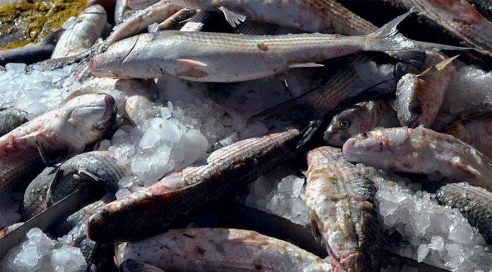Επικίνδυνο ψάρι αποσύρει ο ΕΦΕΤ