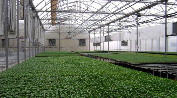 """Γεωργική Ανάπτυξη ΑΕΕ - Νέα προσθήκη για την """"Ελλα-δικά μας"""""""