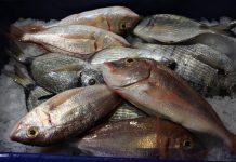 Ληγμένα ψάρια εντόπισαν οι αρχές στον Πειραιά