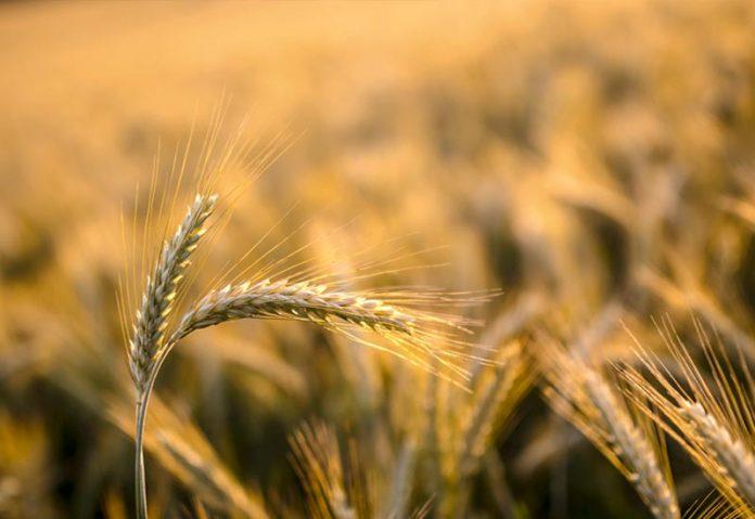 Πρόγραμμα ευφυούς γεωργίας από την ΑΒ Βασιλόπουλος
