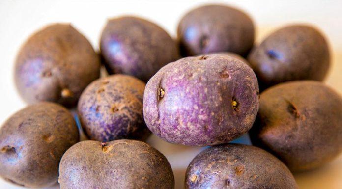Σάπιες πατάτες και όστρακα σε επιχειρήσεις του Πειραιά