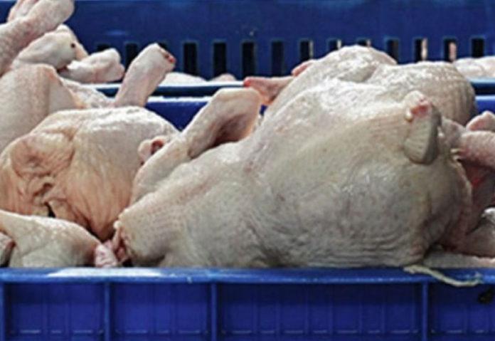 Ακατάλληλα κοτόπουλα