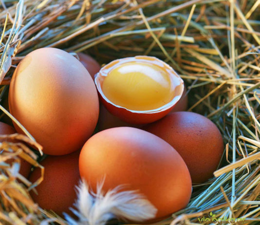 αυγού