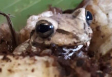 Εξωτικός βάτραχος βρέθηκε σε σούπερ μάρκετ