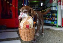 Delivery με σκύλο σε μίνι μάρκετ